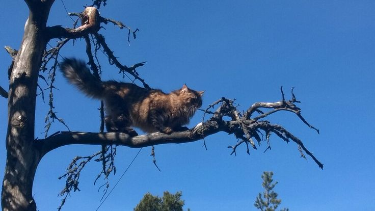 Up in the tree :-)