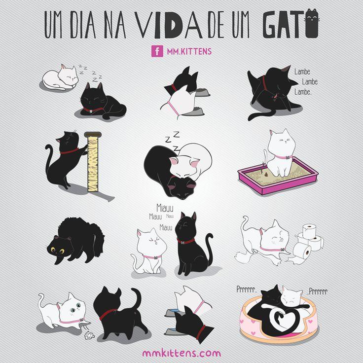 Vida de gato