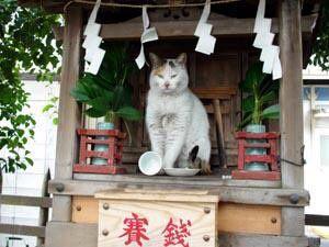 『神ってる』が全然流行ってないのに流行語大賞となり炎上する中で『神ってるネコ』を見ると可愛くてどうでも良くなる件wwwwwwwwww