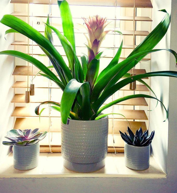 Uma janela ou basculante com vista feia e/ou devassada? Use uma persiana e algumas plantinhas...