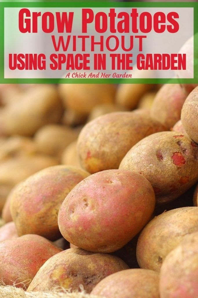 I gave up on growing potatoes for awhile because they took up so much space in my garden. Now I don't have to! I can still grow potatoes and save all the space for things like tomatoes and peppers! #vegetablegardening #gardening #growingpotatoes #smallspacegardening #achickandhergarden