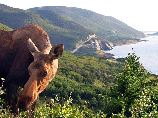 Cape Breton - Cabot Trail in Nova Scotia, Canada