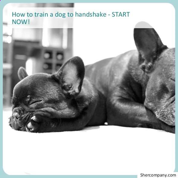 Simple And Easy Dog Potty Training Dog Training Potty Dog