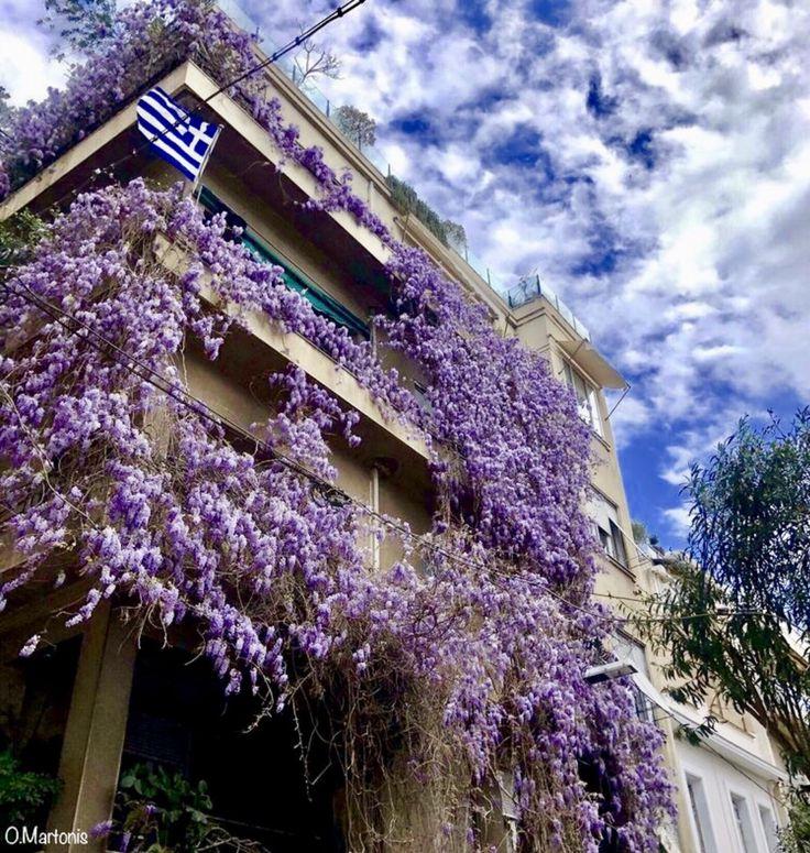 House with Wisteria on the balconies,Kolonaki,Athens,Greece