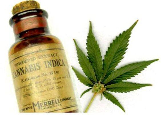 Huile de cannabis en train d'éliminer des cellules cancéreuses!