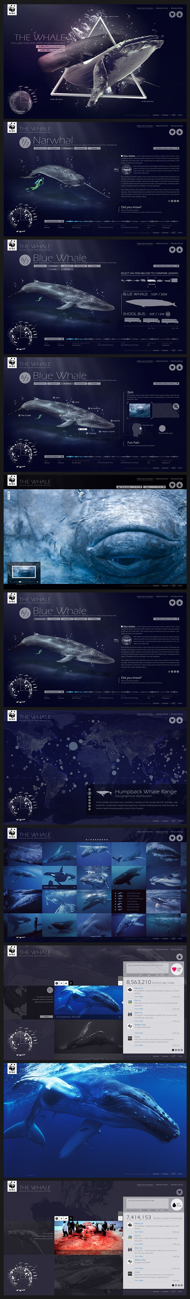 WWF Whale Website | #webdesign #ui