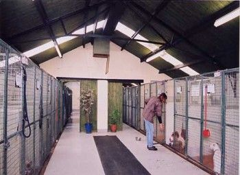 Superb boarding kennels with breeding facilities for sale for Boarding facility for dogs