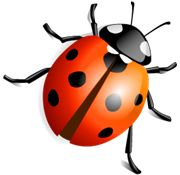 Ladybug PNG Images On this site you can download free Ladybug PNG image with transparent background.