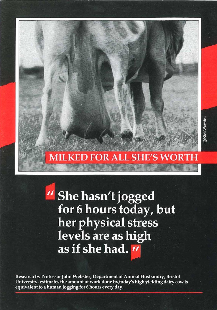 Milked for all she's worth. A hard-hitting leaflet from the 1980s. Compassion in World Farming