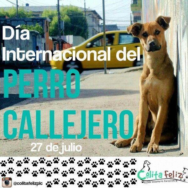 Día del perro callejero