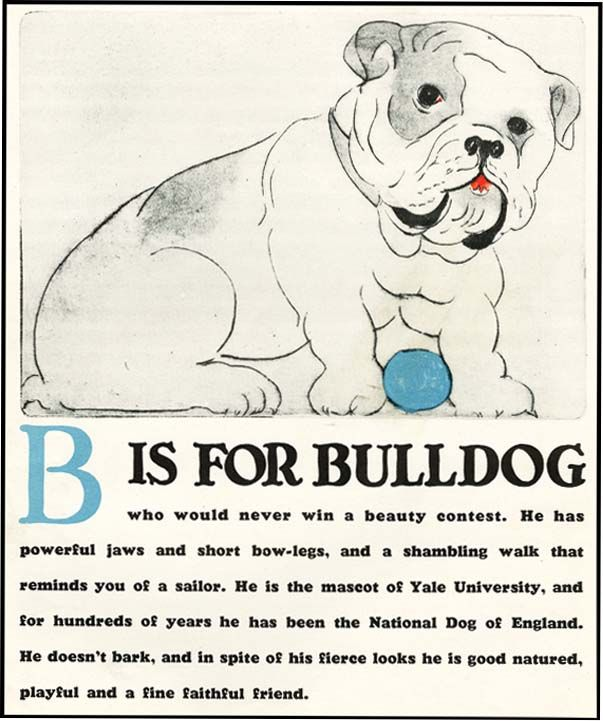 "B is for Bulldog from Clara Tice's ABC Dogs, a dog for every letter (except ""X"")."