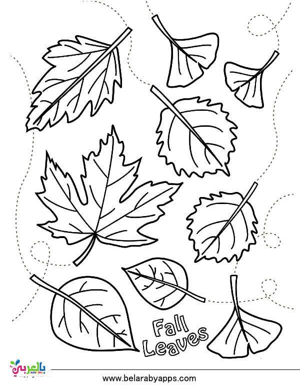 رسومات للتلوين عن فصل الخريف جاهزة للطباعة 2020 بالعربي نتعلم Fall Leaves Coloring Pages Fall Coloring Pages Leaf Coloring Page