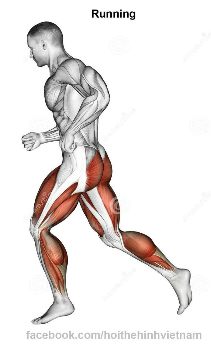 36 best Fisiologia/Anatomia Pierna y Gluteo images on Pinterest ...