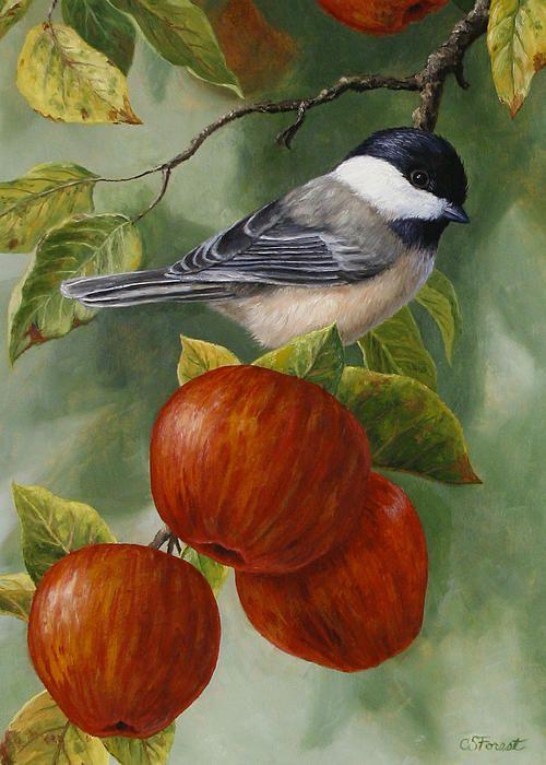 20x25 cms 40x28 cms Si Dios cuida de las aves, cuánto mas cuidara de nosotros sus hijos. Mateo 6:26