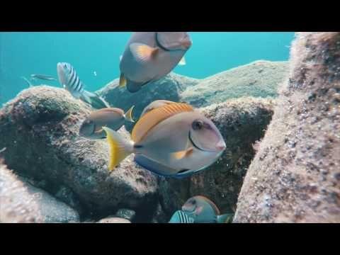 Santa Helena: Un paraíso perdido en medio del Atlántico - azureazure.com