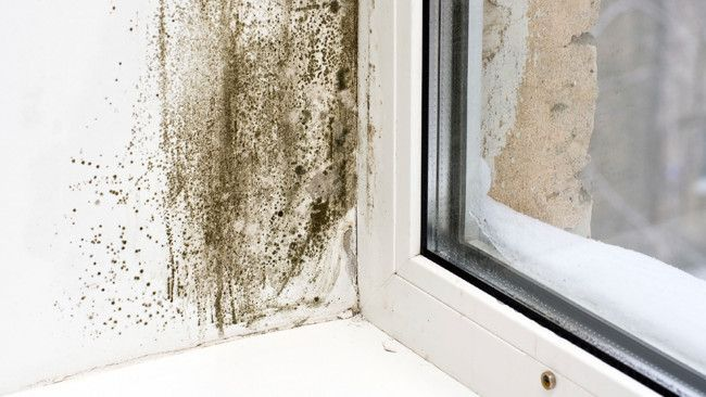 How to remove mould and mildew