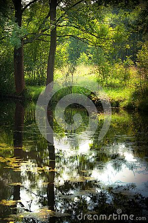 Summer pond in deep forest