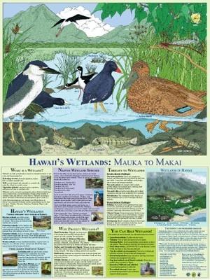 Hawaii Wetlands
