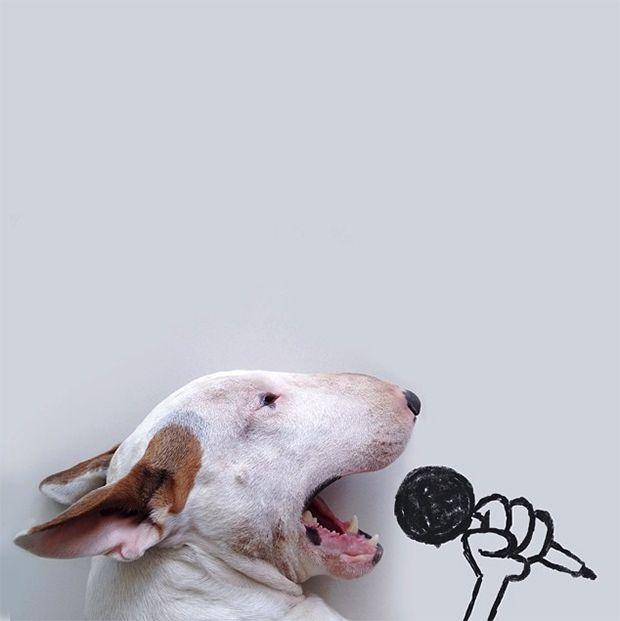 Jimmy Choo: um cachorro bull terrier retratado com muito humor e criatividade!
