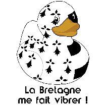 Canard breton vibrant