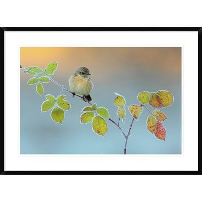 """Global Gallery 'Winter Colors' by Andres Miguel Dominguez Framed Graphic Art Size: 26"""" H x 36"""" W x 1.5"""" D"""