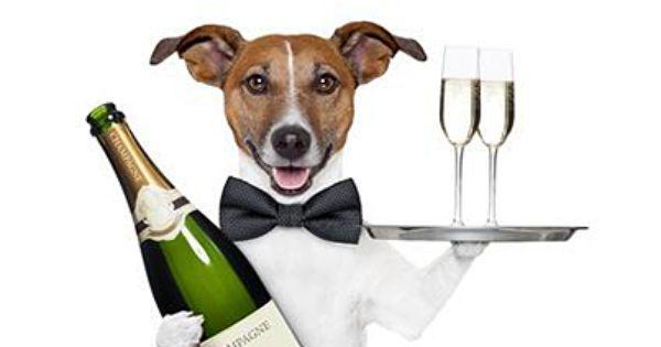 jack russelel honden afbeeldingen | Czytać i gratulować! :) http://www.newspoint.pl/silnik-wyszukiwawczy ...