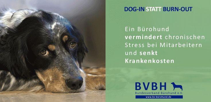 Infocard: Bürohund - Senkt Krankenkosten