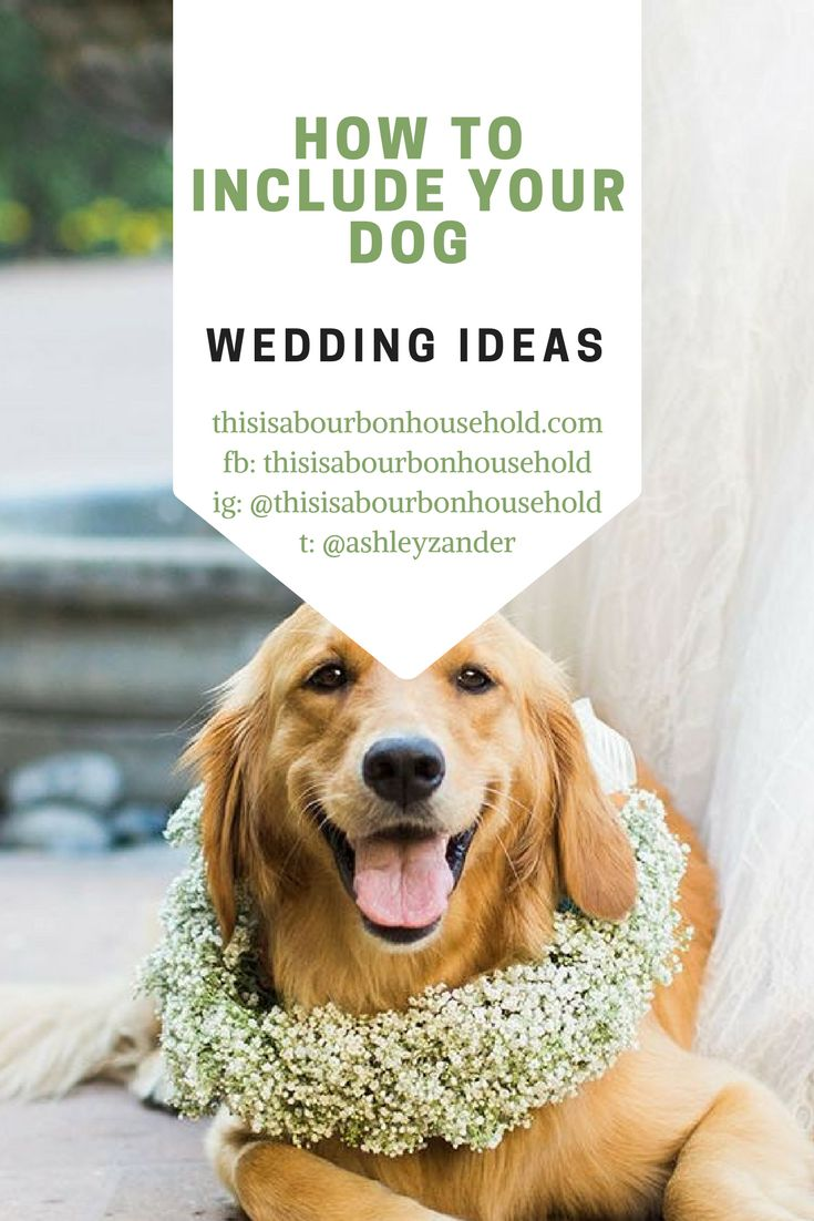 46 best Wedding - How to Include Your Dogs images on Pinterest ...