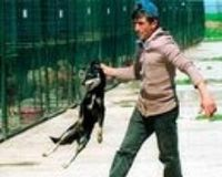 More signatures please EU - Stop to consider - Give the companion animals protection in the EU Treaties NOW!