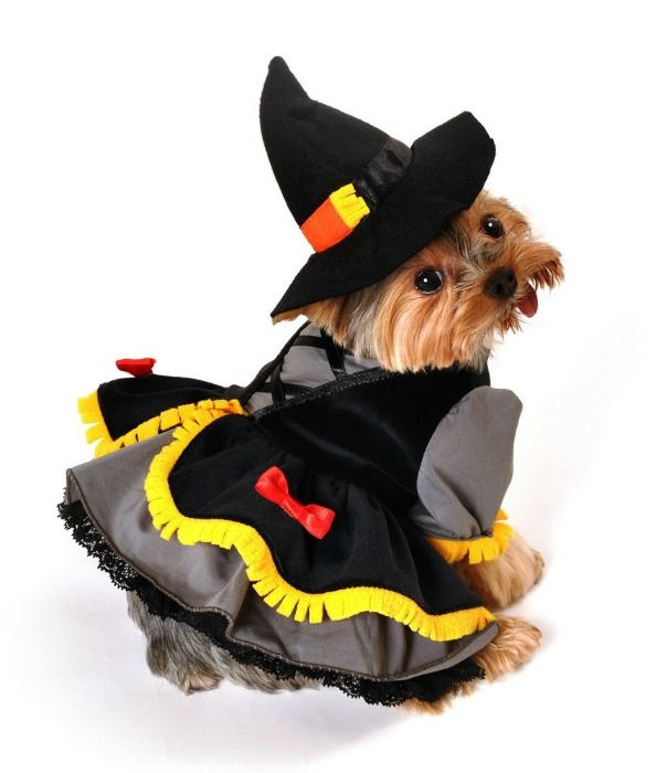 scarecrow witch dog costume anit designer two piece scarecrow witch dog costume includes fringe trim tiered dress with attached petticoat and witch hat - Dogs With Halloween Costumes On