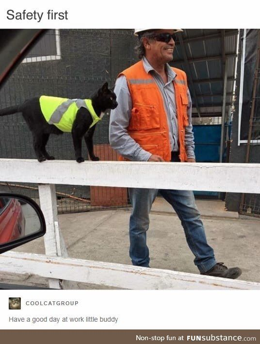 Construction Kitty is ready for another hard day's work.