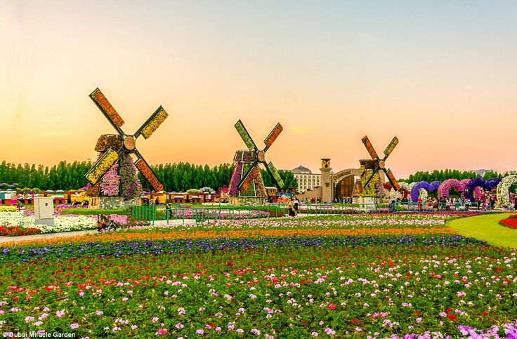 Inside the world's largest flower garden... in the middle ... - photo#17