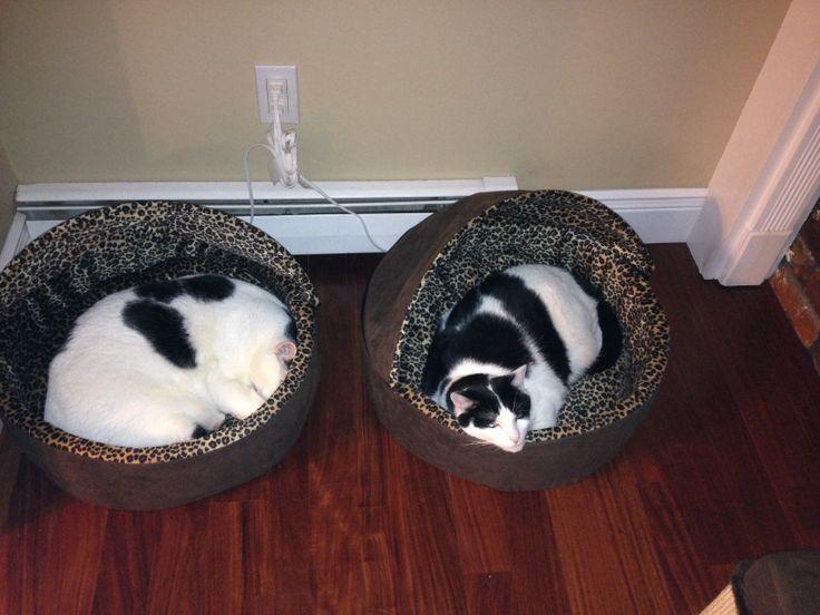 Mortimer and Randolph. :)