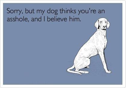 : Sooo True, Mi Dogs, Jennifer Irwin, Things Stuff Items, Dogs Ha, True Stories, Jennifer Milsap