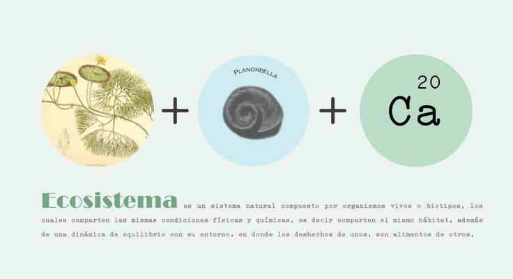 Ecosistema, esto es lo que nosotros recreamos. No somos producto, queremos generar otras interacciones donde puedas entender lo que ves.