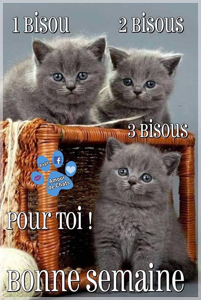 Epingle Par Martine Bourgogne Sur Citation Bonne Journee Humour