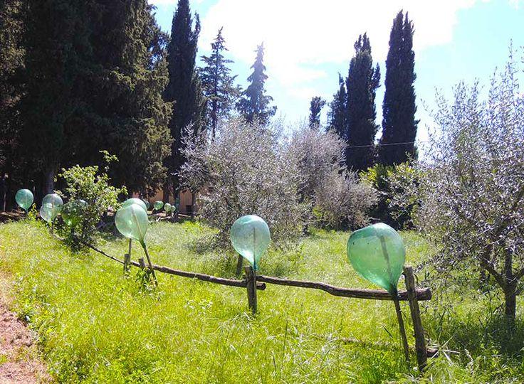 Wine jugs mark the pathway. #danielspoerri