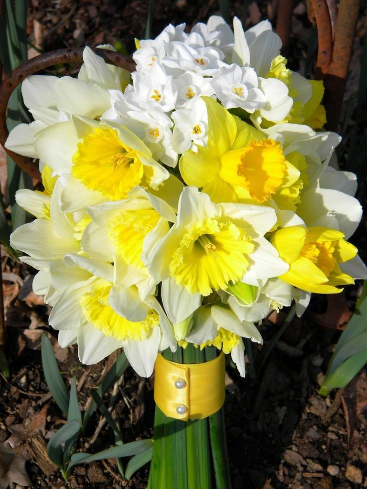 Pretty Spring Wedding Bouquet Featuring: White/Yellow Daffodils, Paperwhites
