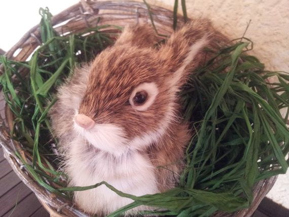 9 best easter gift ideas images on pinterest easter gift gift real fury rabbit for easter negle Gallery