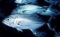 PREDATOR FISH UK - THE UK s NO.1 RARE FISH SPECIALIST
