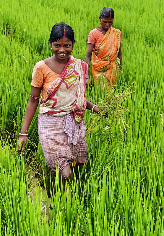 Farming life in Birbhum, West Bengal, India