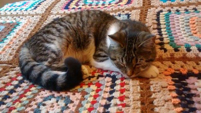 Gato y crochet