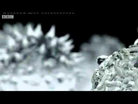 Glass sculptures of viruses, bacteria and other microorganisms, by UK artist Luke Jerram.