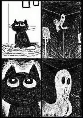5 Telltale Signs That Your Cat Can See Ghosts - TheBestCatPage