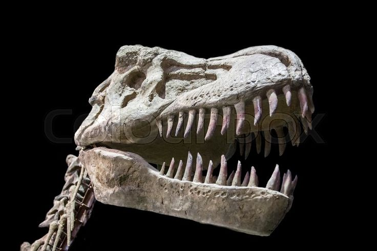 Stock image of 'Tyrannosaurus Rex skull isolated over black background'