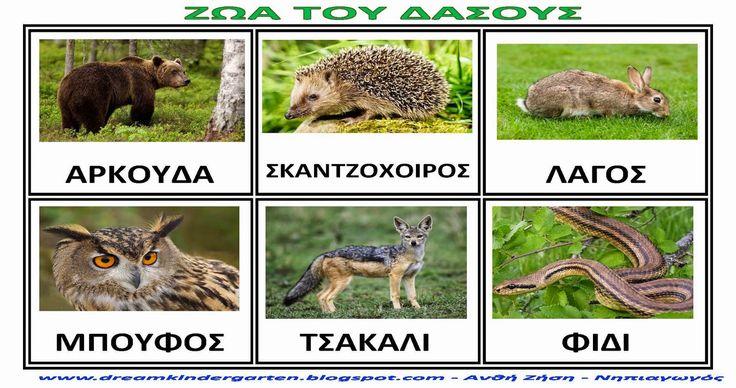 ζώα του δάσους στο νηπιαγωγείο - Αναζήτηση Google