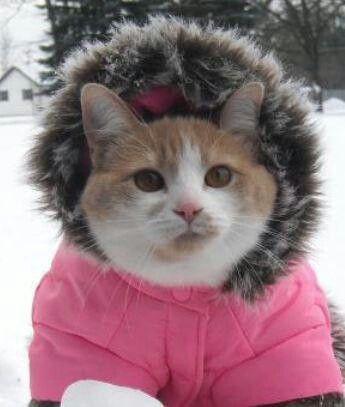 Brrrrrr... all bundled up   The Well Dressed Cat   Cats ...