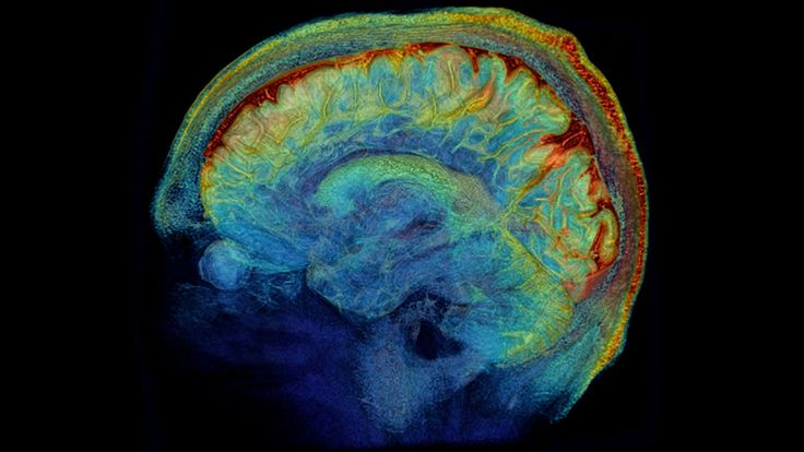 Mapping the Highways of the Brain: Deanna Barch and her colleagues are trying to map connections in the human brain.The Human Connectome Project, which aims to produce an interactive brain map.  http://www.nytimes.com/2014/01/07/science/the-brain-in-exquisite-detail.html?smid=tw-share