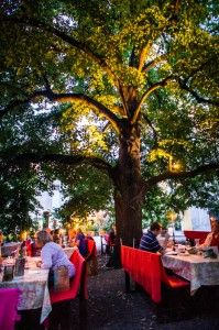 Eating under the linden tree, wachau, Austria #feelaustria