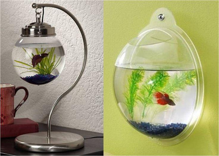 Peixe Betta em Pequenos Aquários